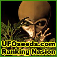 nasiona marihuany, konopi, ranking, topowe, odmiany