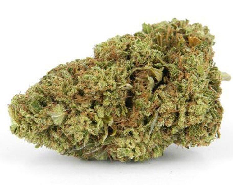 Nasiona marihuany, konopi, recenzja, odmiany, Blackberry, Kush