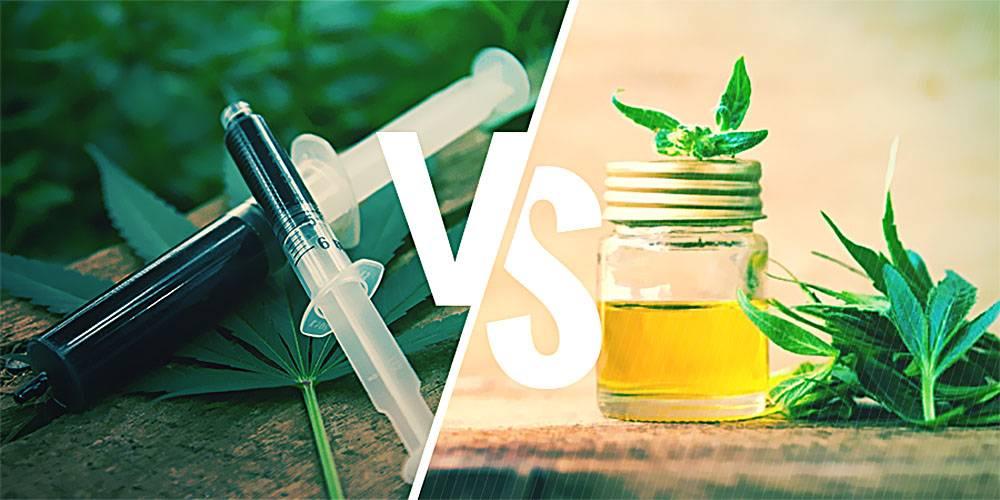 Różni, Różnice, Olej, Konopny, Oleju, Cannabis-owego, Cannabis-owy, Marihuany, CBD, RSO, Cannabis Sativa