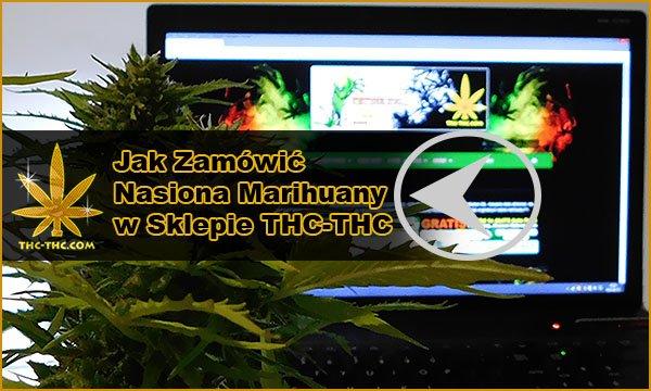 nasiona marihuany, nasiona konopi, jak zamówić
