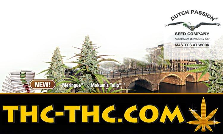 Dutch Passion, ciekawe, geny, genetyki, nasion, marihuany, konopi, cannabis