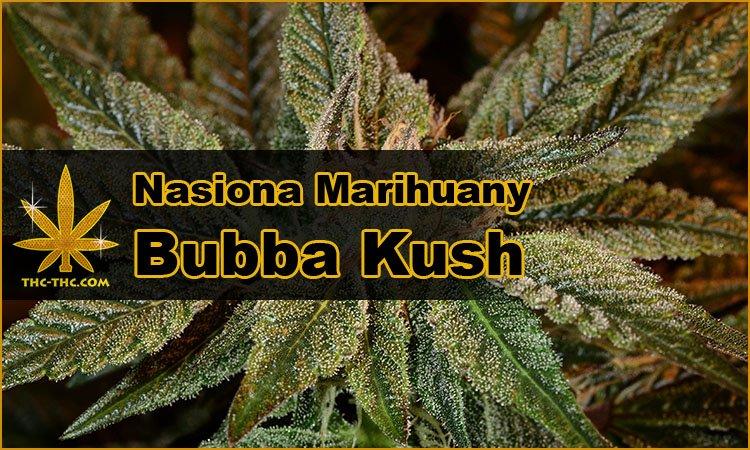 Nasiona Marihuany, Nasiona Konopi, Legendarnej, Odmiany, Bubba Kush