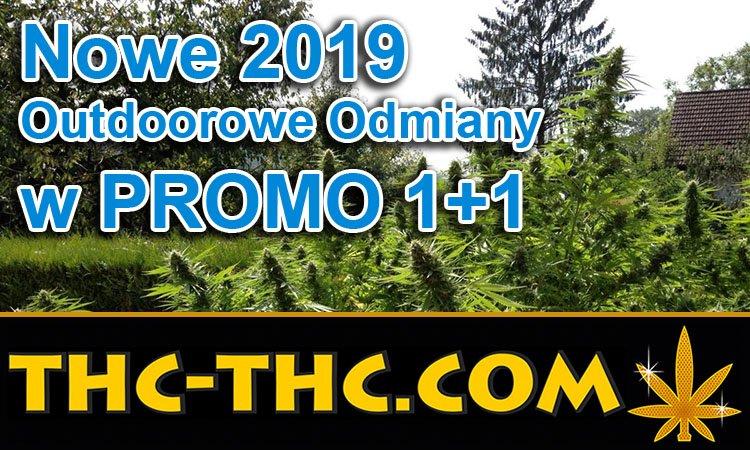 nasiona, marihuany, konopi, cannabis, na outdoor