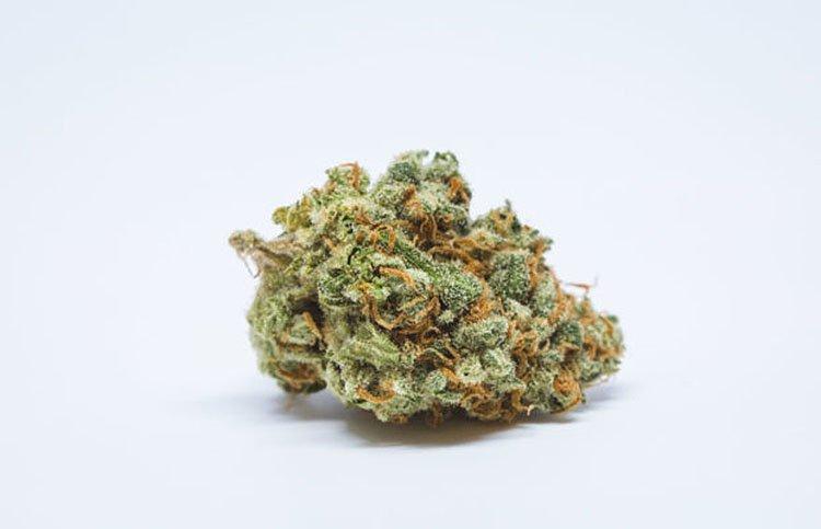 Nasiona marihuany, konopi, recenzja, odmiany, Euphoria