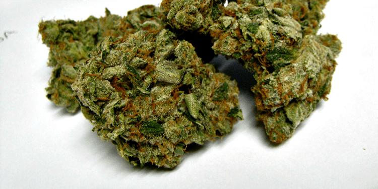 Nasiona marihuany, konopi, recenzja, odmiany, O.G. Kush