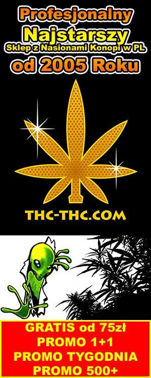 sklep z feminizowanymi nasionami marihuany, konopi, cannabis thc