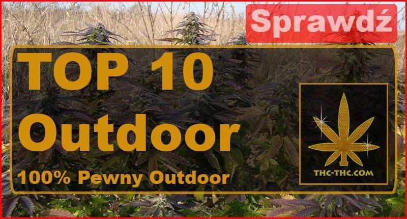 najlepsze, sprawdzone, odmiany, nasiona, marihuany, konopi, outdoor, top, top10